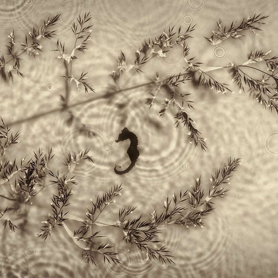 Camera-less Photography | Photograms