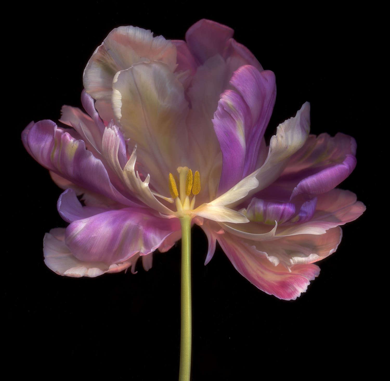 GHOST FLOWER  N°3