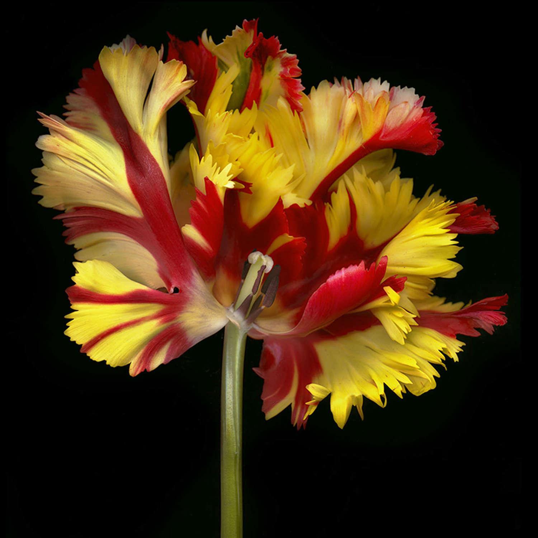 GHOST FLOWER N°5